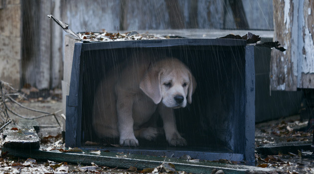 "Budweiser Debuts Heartwarming ""Lost Dog"" Super Bowl Commercial"