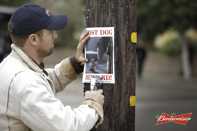 Budweiser - Lost_Dog