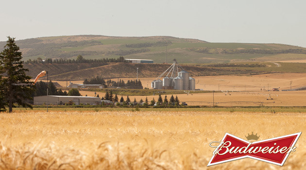Barley To Budweiser