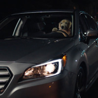 Subaru's Driving Dog Family Returns For More Adorable TV Spots