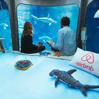 Airbnb Offers Up A Chance To Sleep With The Fishes.. Literally